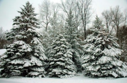 4 Types of Evergreen Content Your Brand Needs to Thrive